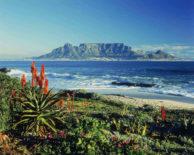 Table Mountain, Sudafrica