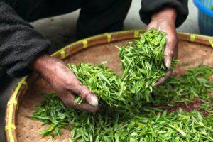 Farmhouse Hand Fresh Tea