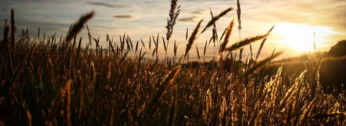 Sun Sunset Sunrise Sky Wheat Field