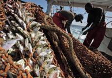 angola fishing