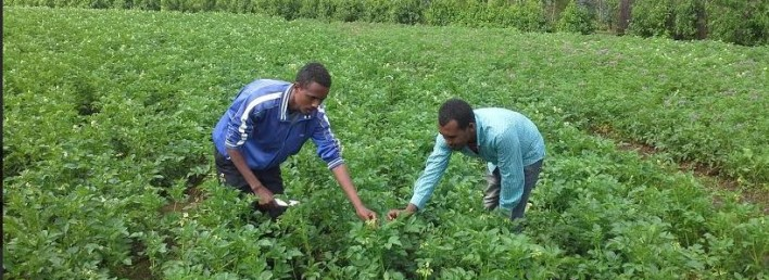 Risultati immagini per agricoltura in etiopia