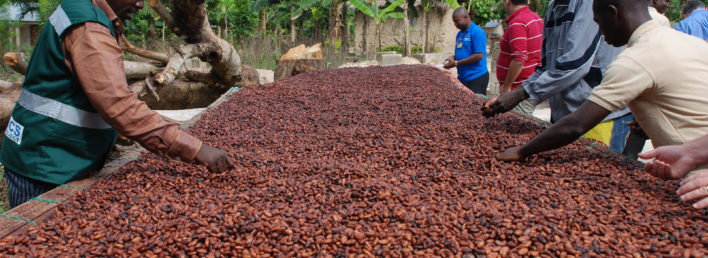 day2_cocoabeans_farmers1