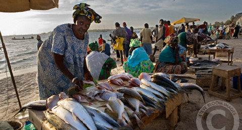 Women selling fish on the beach