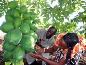 Southern africa agriculture program covers research and increasi